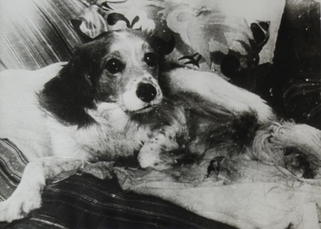 Mikhail Boulgakov Coeur de chien Bouton
